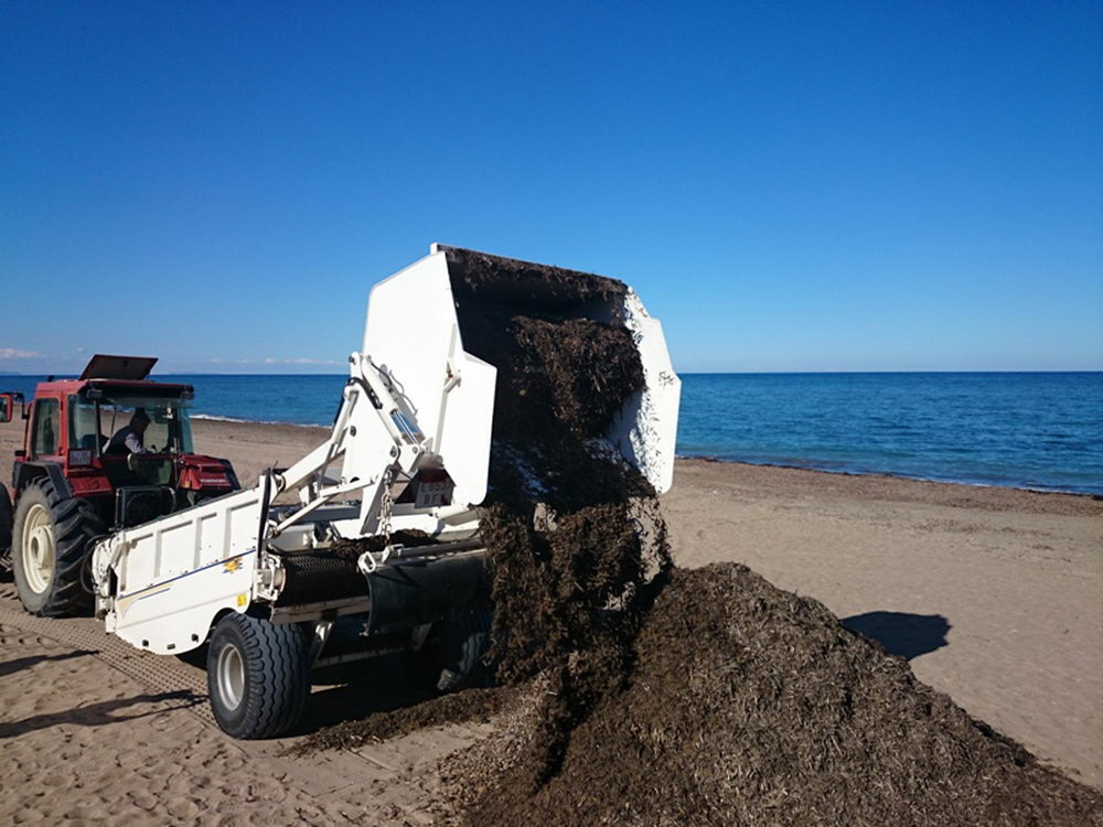 Removing the sargassum from the beach.