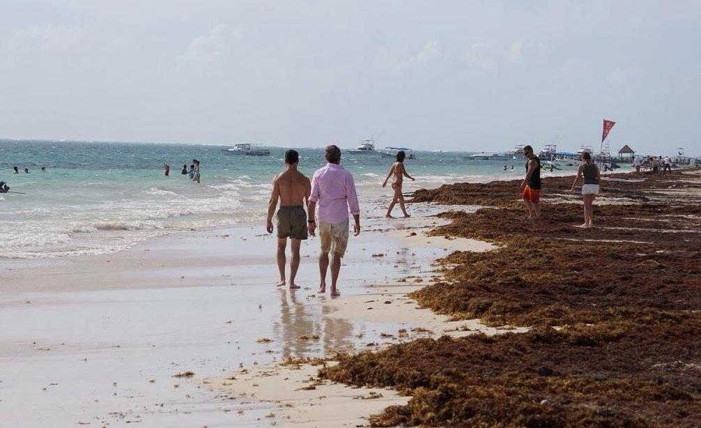 playas-con-sargazo