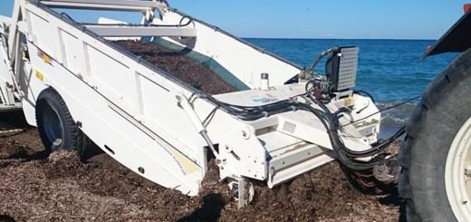 Limpieza de sargazo en playas